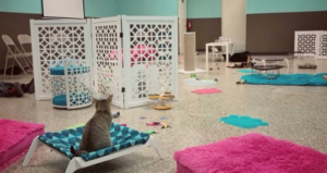 Cat Cafe PHX Animal Behavior Center