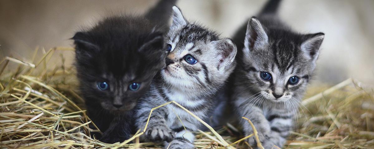 arizona kitten training